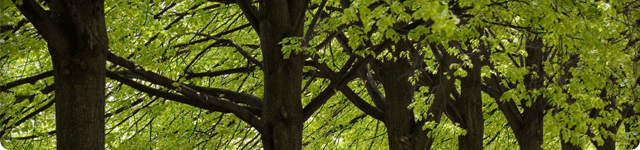 Tree Fund header image